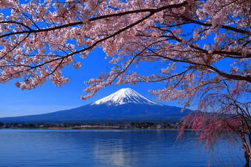 Papiers peints Fleur de cerisier Les fleurs de cerisiers fleurissent complètement et le mont. Fuji Lake Kawaguchi Japon