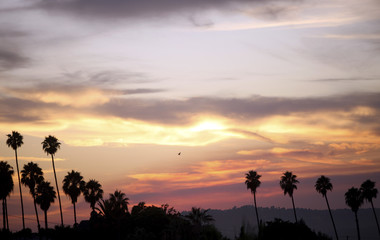 Palm trees are silhouetted at sunset against clouds and smoke rising from wildfires in Los Angeles