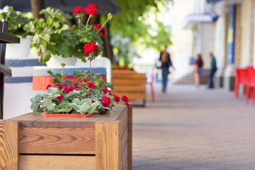 Street cafe flowers and herbs decor concept.