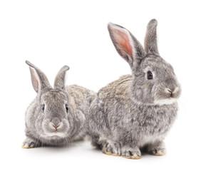 Two gray rabbits.