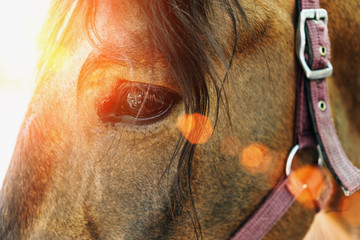 Horse eye closeup on sunset