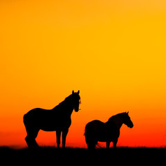 Silhouette of two horses on a background of the sunset sky