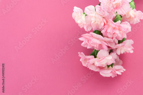 Bouquet of  pink Carnations on a pink background. Mother's Day greeting card. Flower Gift.