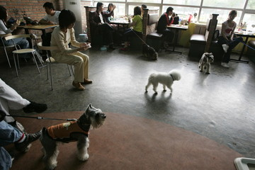 Dog lovers eat at the Coolbaby dog restaurant in Beijing May 20, 2006. The newly opened dog theme pa..