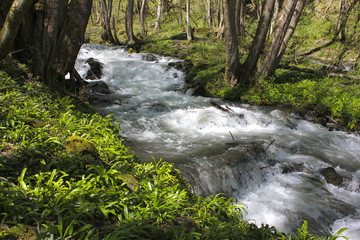 Stormy mountain stream with white foam in forest.