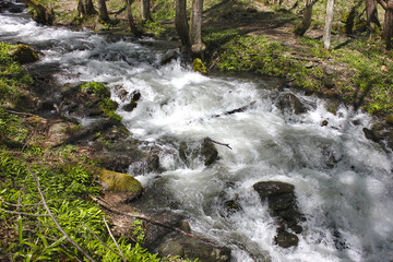 Mountain stream with white foam among trees, stones and grass in spring forest.