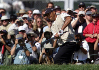 TIGER WOODS HITS OUT OF EDGE OF BUNKER AT THE US OPEN.