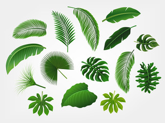Tropical leaves set isolated, suitable for nature concept, summer and holiday. Vector illustration