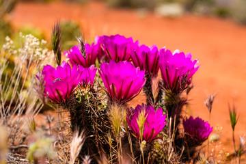 Sedona cactus flower