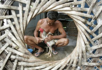 Man cleans rooster at his farm at outskirts of Bangkok