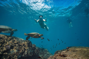 A snorkel girl diving underwater to watch sea turtles in natural habitat. Pacific ocean wildlife scenery