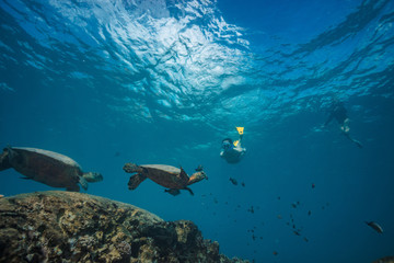 A snorkel girl diving to watch sea turtles in natural habitat. Pacific ocean wildlife scenery. Travel and Vacation sport life and activity