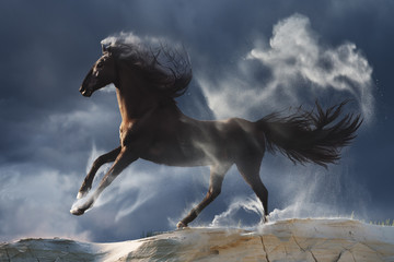 Wild stallion in dust against stormy environment