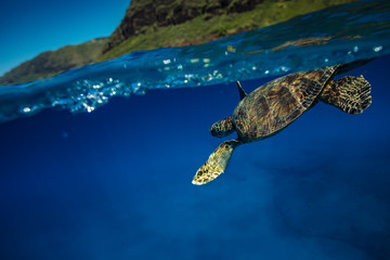Sea turtle under water line in blue ocean