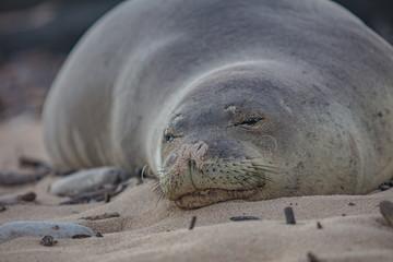 Resting Seal