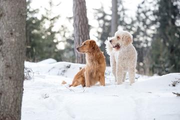 Zwei Hundefreunde im Schnee