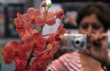 A visitor takes a picture of an Ascocenda orchid at the 55th annual Nairobi Orchid Show