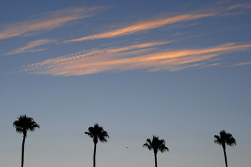 The evening sky glows over palm trees after sunset in San Diego