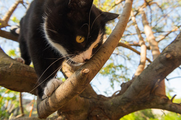 The cat is climbing on a tree in the garden