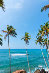 Palm trees over the ocean