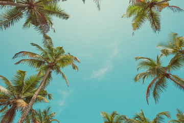 Vintage toned palm trees leafs over sky background with sky as copy space