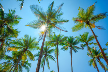 Tropical palm trees over clear blue sky with shining sun