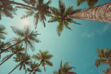 Vintage toned palm trees over sky background