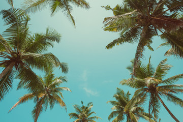 Vintage toned palm trees over sky background with copy space in center of leaf frame