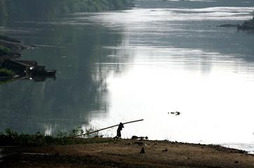 Man carries bamboo tree along banks of Kelaniya River in Yatiyanthota