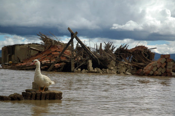 A goose is seen in the flooded town of Vinto