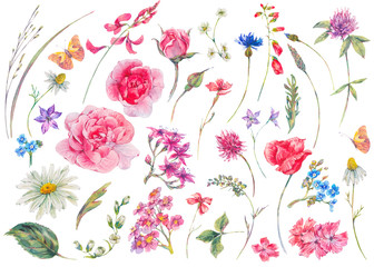 Watercolor set of vintage floral summer natural elements.