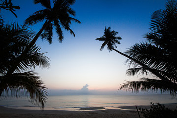 Silhouette of coconut tree slope down to the beach on sunrise background, Chumporn province,  south of Thailand