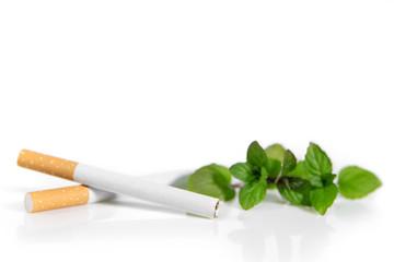 Fototapeta Mentholzigaretten und Pfefferminze vor Weiß, Verbot von Menthol Zigaretten obraz