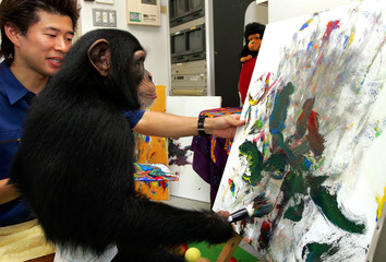 Asuka, three-year-old female chimpanzee, paints an oil painting at a studio at Izu Shaboten Park in ...