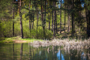 Small lake in forest during sunny day