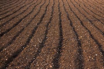 Ploughed soil in a field in Malta Wall mural