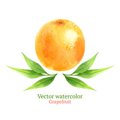 Watercolor vector grapefruit