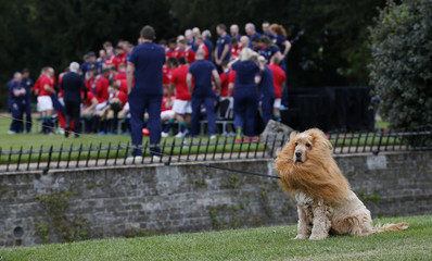 Lola the sheep dog dressed as a Lion sits as The British & Irish Lions team prepare for a team photo