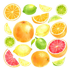Watercolor fruit set with lemon, lime, orange and grapefruit