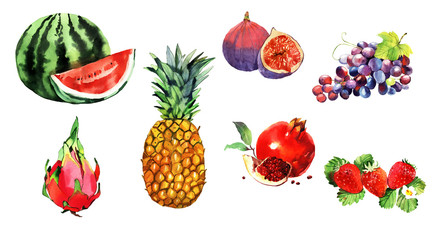 watercolor exotic fruits set, pineapple, pomegranate, watermelon, dragon eye