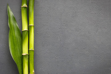 bamboo grove and leaves on grey background