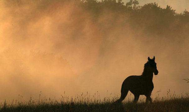 A horse runs in a meadow as the fog raises from a steaming forest during sunset after a storm near Votice