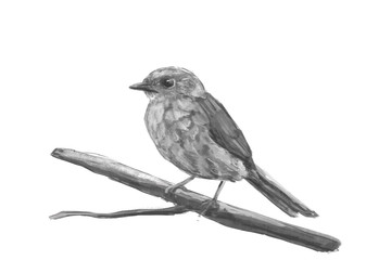 Illustration of a Dunnock. Digital painting.