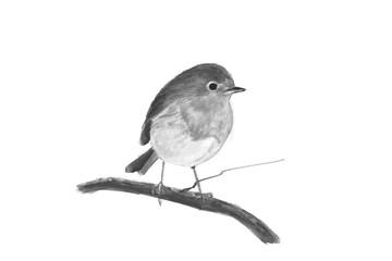 Illustration of a Robin. Digital painting.
