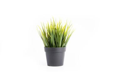Decorative grass in flowerpot with white background