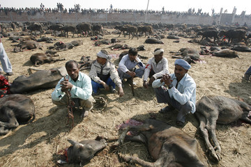 BEST QUALITY AVAILABLE  People take part in a mass sacrifice of the buffaloes near Gadimai Temple at Bara District