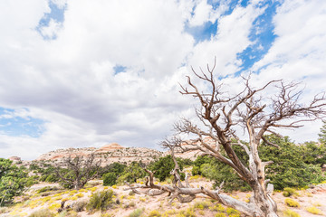 Overlook of white canyons in Arches National Park with dead tree