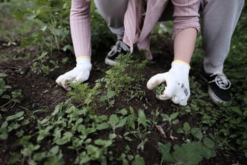 Young woman working in organic farm