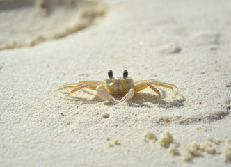 Little crab on beach