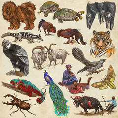 An hand drawn full sized collection, colored pack of animals. On old paper.